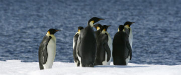 my-antarctica-travel-weddell-sea-emperor-penguins