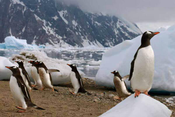 reasons-visit-antarctica-penguin