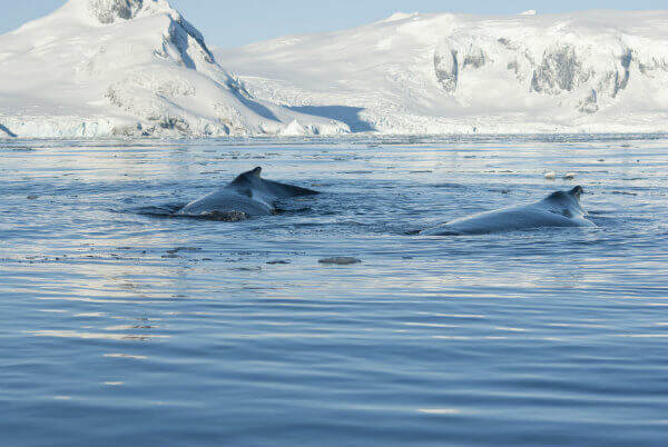 travel-in-antarctica-south-pole-zones-antarctic-peninsula-whales
