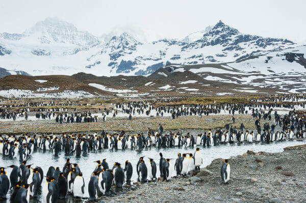 travel-in-antarctica-south-pole-zones-south-georgia-penguins