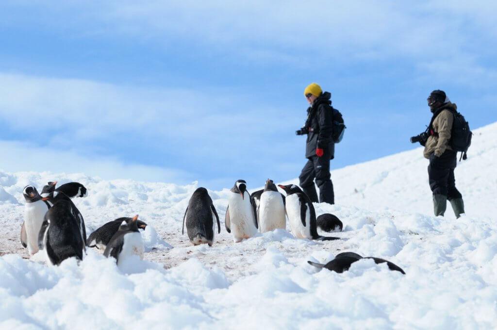 guide-antarctica-fly-cruises-gentoos